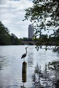 12_Long Water Heron.jpg