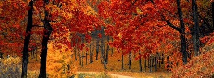 CT.fall-autumn-red-season.edited.jpg