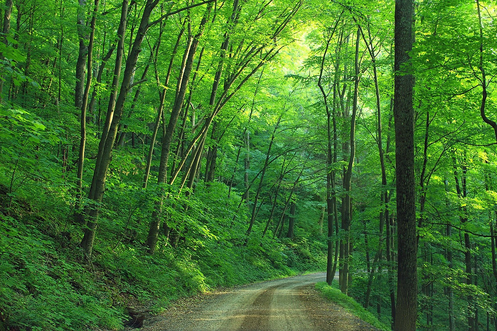 PA.woods-landscape-road-loyalsock-state-