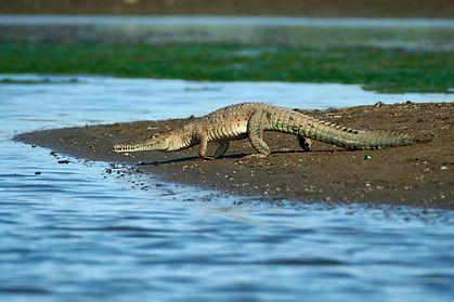 Crocs_Ruchira-0-.jpg