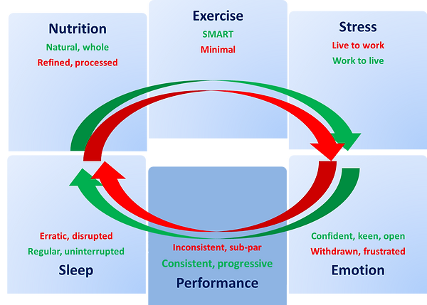 Mightify wellbeing programme diagram