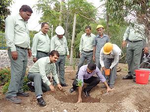 plantation-img.jpg