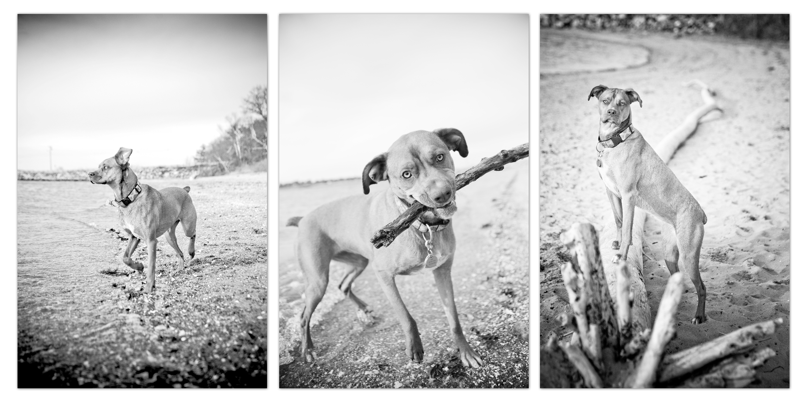 maine dog photographer