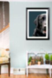 dogfaceinroom-2.jpg