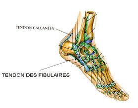 Tendinopathie des fibulaires