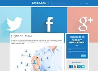 social media blog website template wix