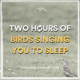 2 Hours Of Birds Singing You To Sleep