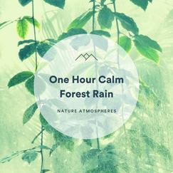 1 Hour Calm Forest Rain