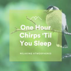 1 Hour Chirps 'Til You Sleep