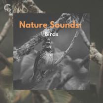Nature Sounds: Birds