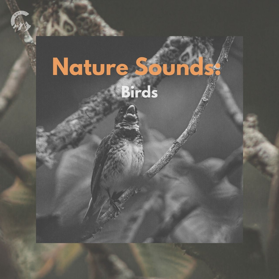 Nature Sounds: Birds