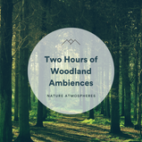 2 Hours of Woodland Ambiences