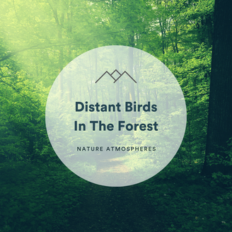 Distant Birds In The Forest