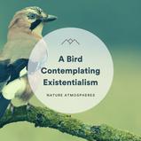 A Bird Contemplating Existentialism