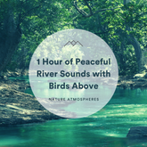 1 Hour of Peaceful River Sounds with Birds Above