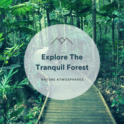 Explore The Tranquil Forest