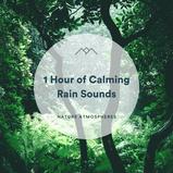 1 Hour of Calming Rain Sounds