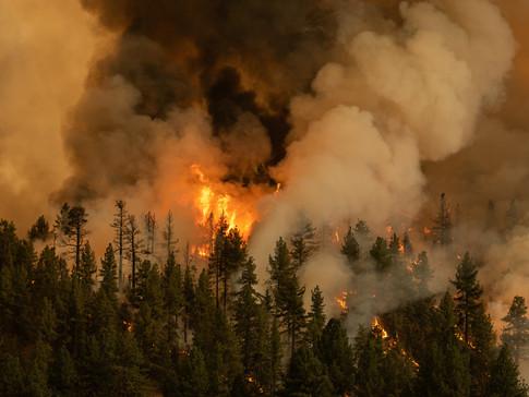 The Tamarack Fire 010