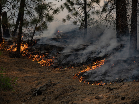 The Tamarack Fire 021