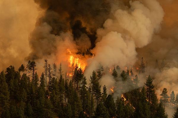 Tamarack Fire (Trevor Bexon)
