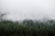 Tree Fog | North Cascades National Park, Washington