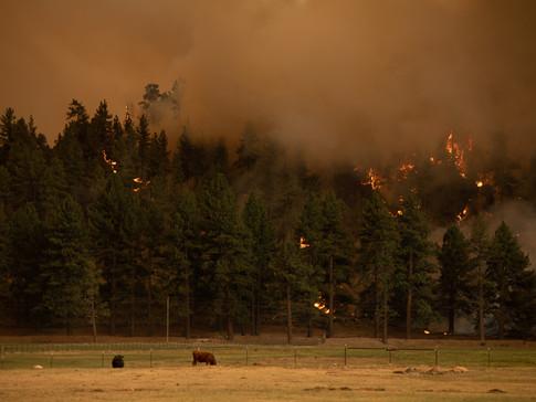 The Tamarack Fire 011