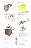 Mason Farm insects