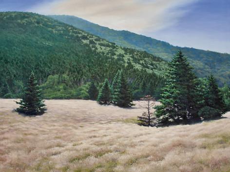Roan Mountain Last Light