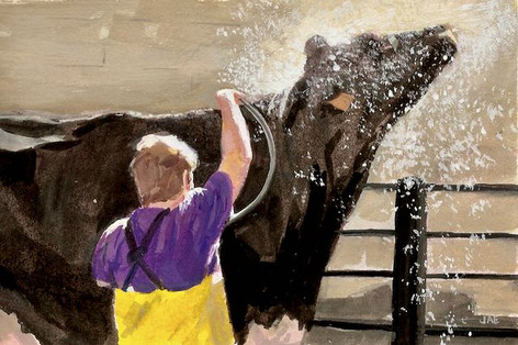 Cow Shower at the State Fair