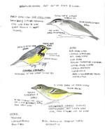 Brumley North birds