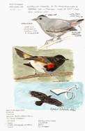 Shenandoah Skyline birds