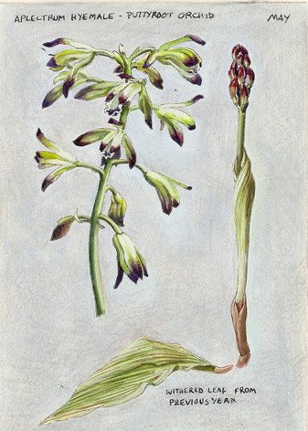 Puttyroot Orchid Journal Page