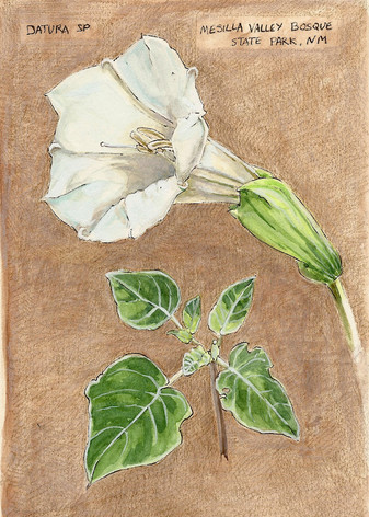 Datura Journal Page