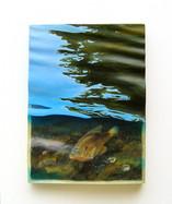 Red-eared Sunfish 2