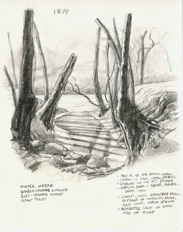 Notes at an icy creek on the Haw