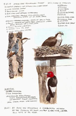 Jordan Lake birds