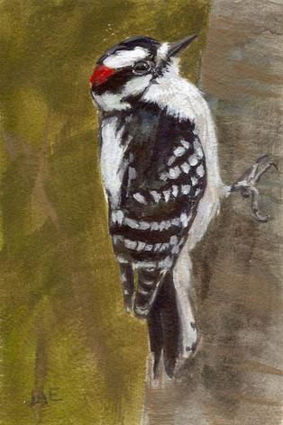 Downy Woodpecke