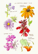Botanical Garden Late Summer Blooms