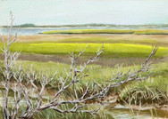 Salt Marsh at North River