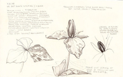 Toad Trillium and Spring Ephemerals Journal Page