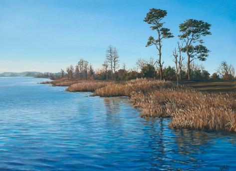 Pungo Lake In Winter