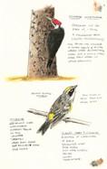 Birds along the Haw