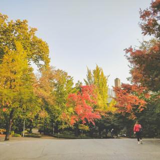 _fall.jpg