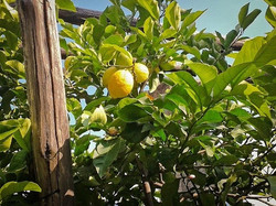 Limone sul Garda