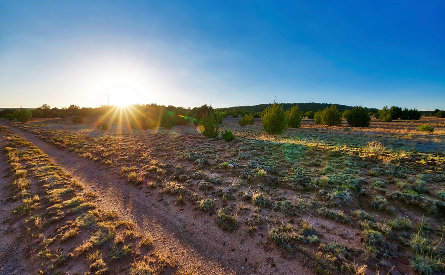 7.49 Acres with a Mix of Trees and Open Meadow! (Edgewood, NM)