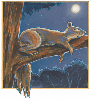 """""""Squirrel""""   2016"""