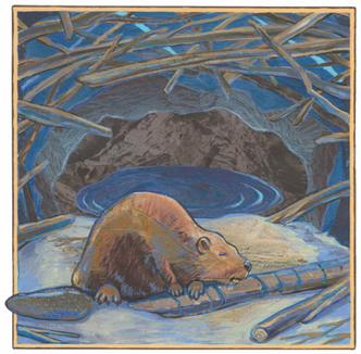 """Beaver""   2016"