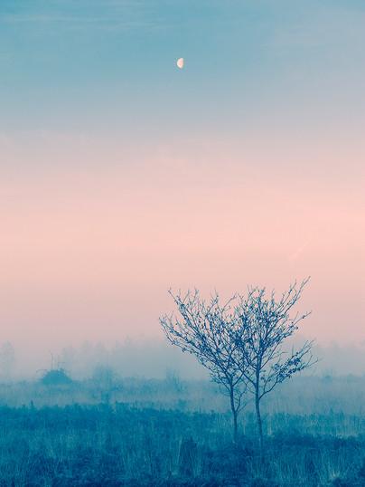 Morning Fog - Part One