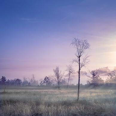Morning Fog - Part Two