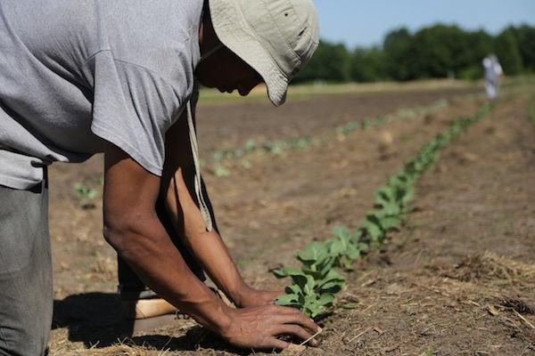 Volunteer On Farm, June 20-27 (PM)